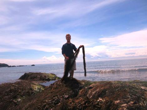 During the Friday Harbor Labs Marine Algae field course, I observed the diversity of marine algae on San Juan Island across a wide range of habitats, including Eagle Cove, San Juan Island, WA.