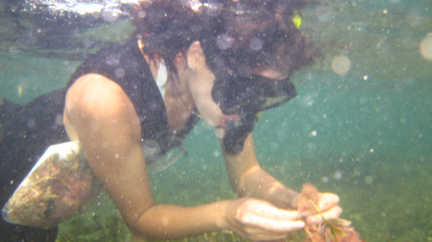 Kyra collecting corallines in Western Australia via snorkel.