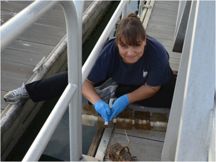 Holly collecting biofilms from panels deployed at a Florida Port.