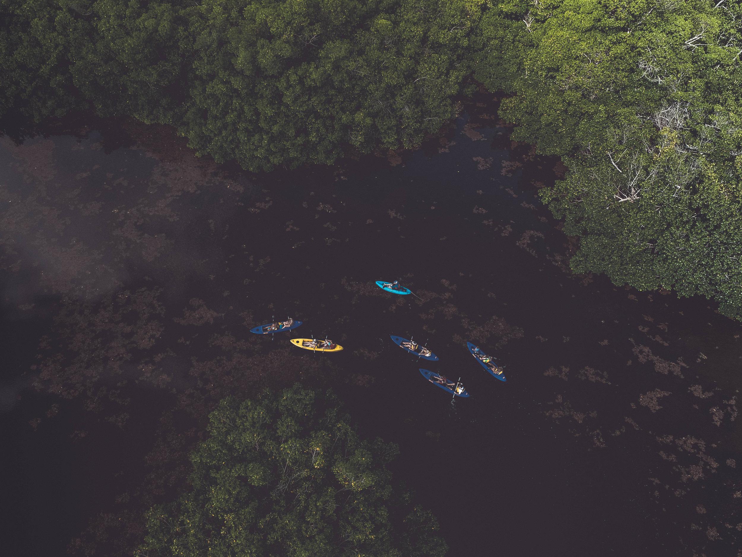 mangrove2-1.jpg