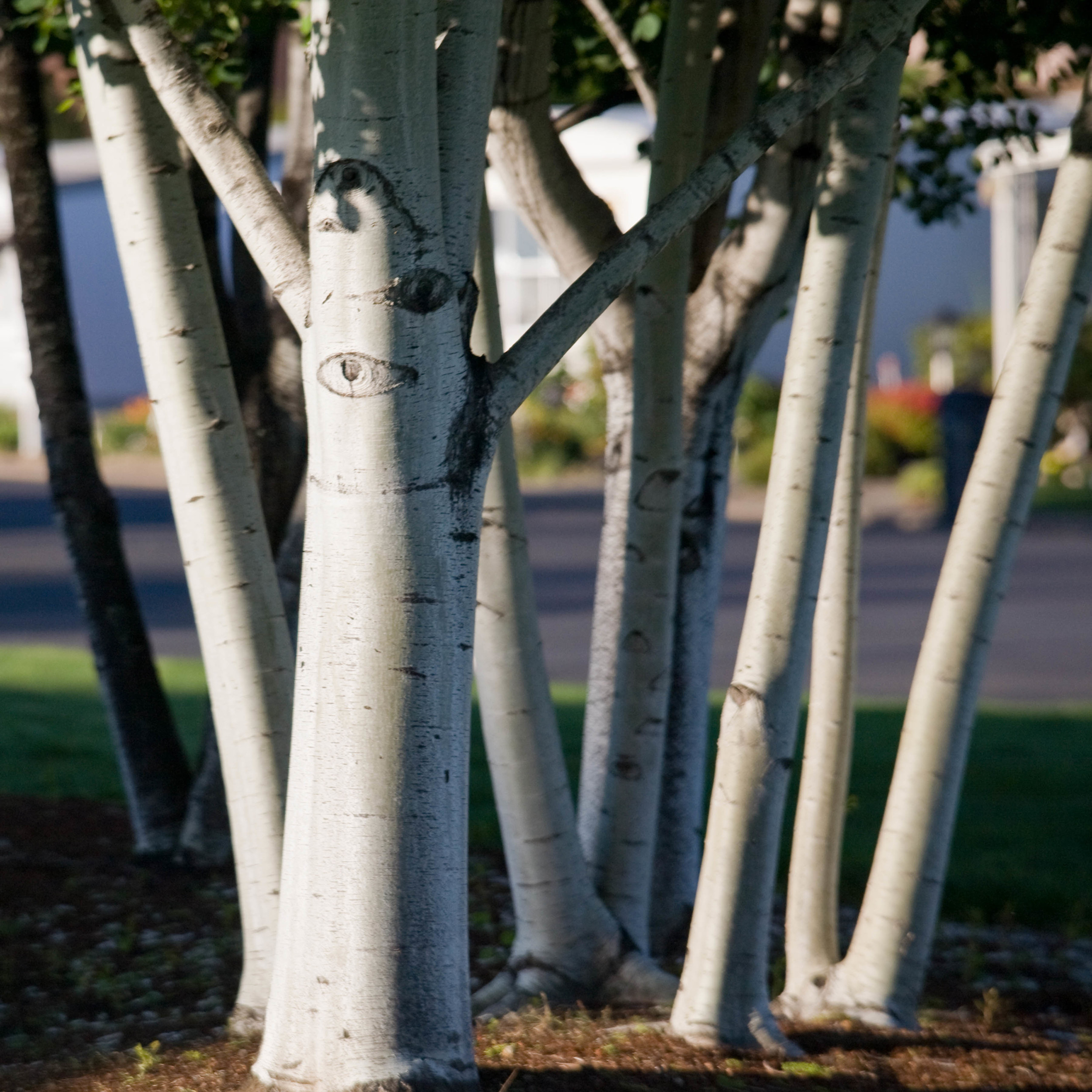 tree trunks thumb.jpg