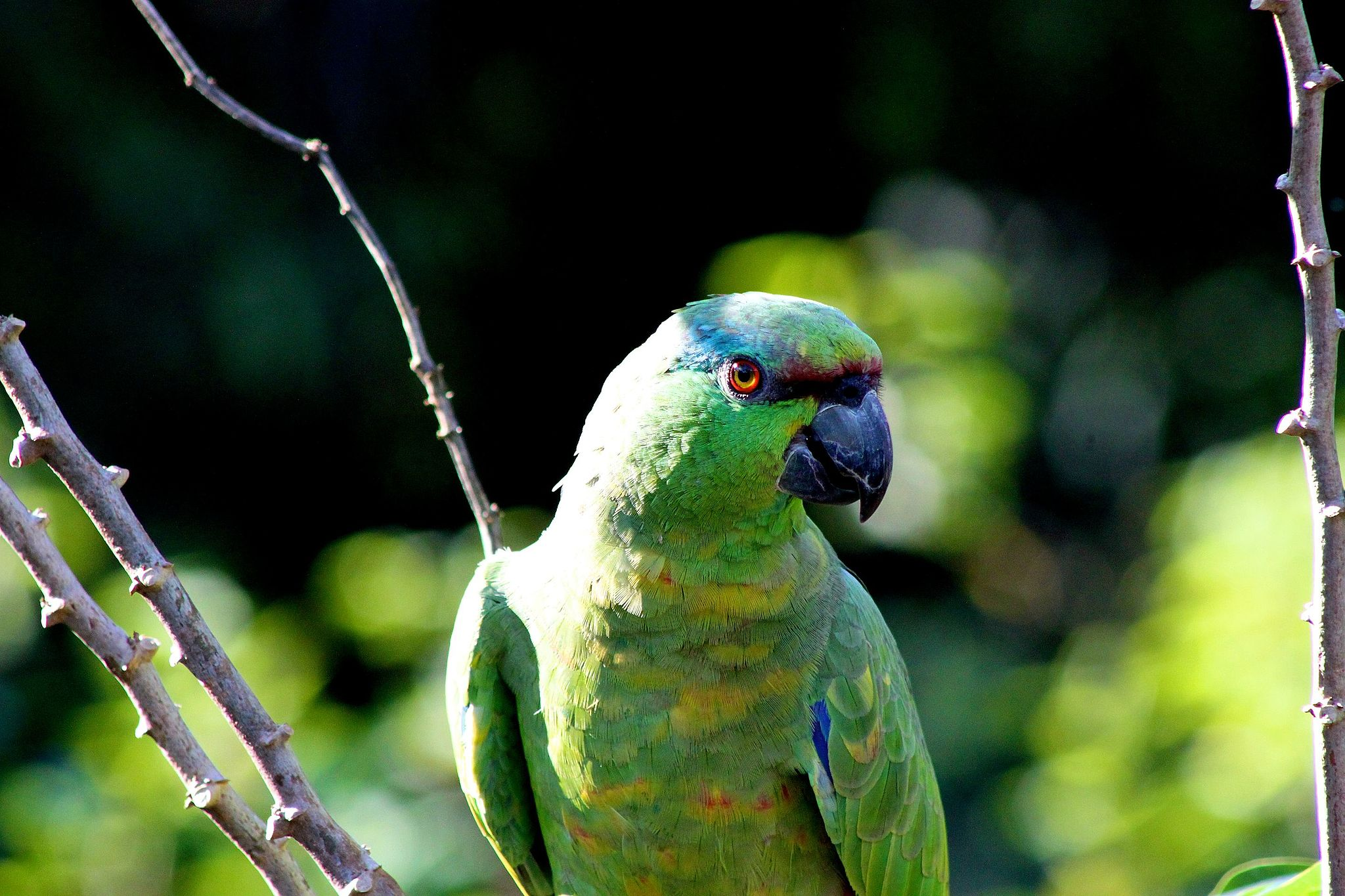 It's home to more than 1300 birds species