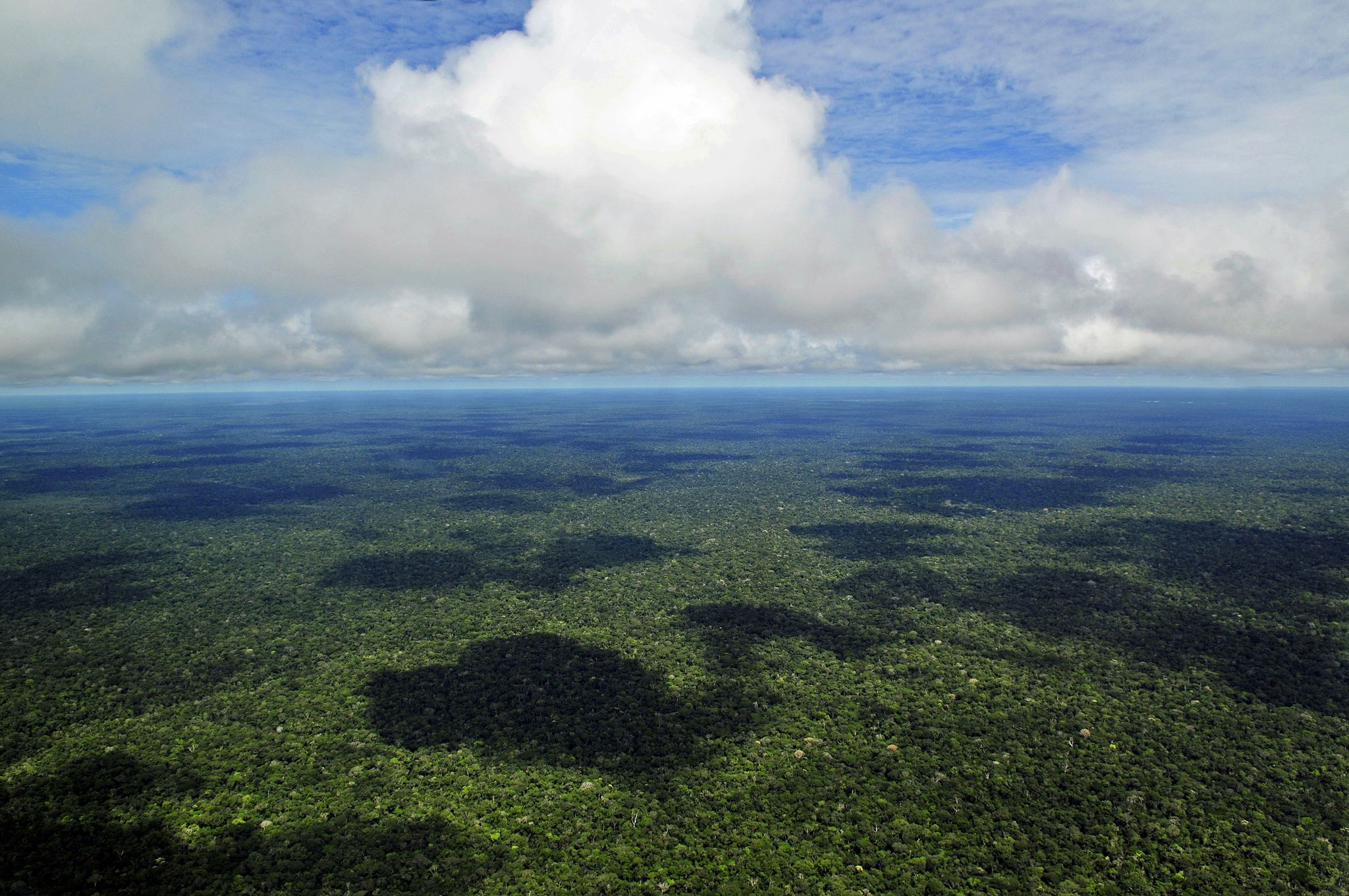The Amazon Rainforest covers an area of 6,7 million km2 and 9 countries