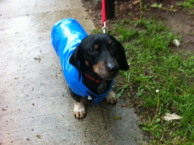 This is me, Petey, in my favourite blue raincoat!