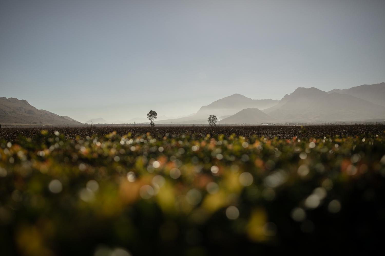 heisvisual-wedding-photographers-documentary-rawsonville-south-africa002.jpg