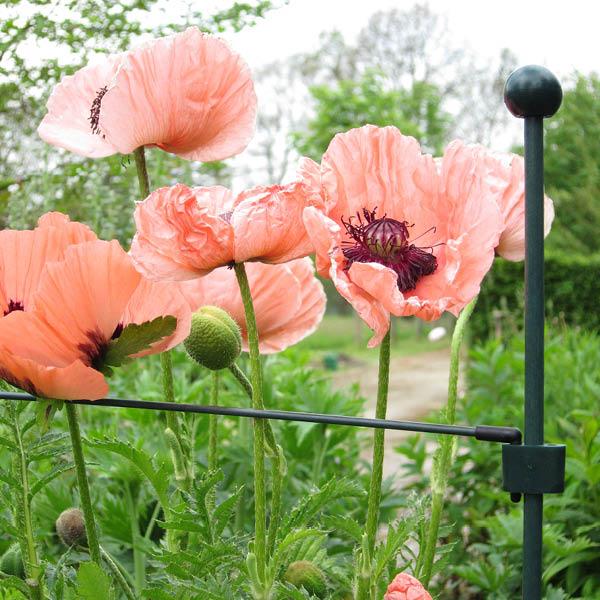 Peacock Garden Supports.jpg