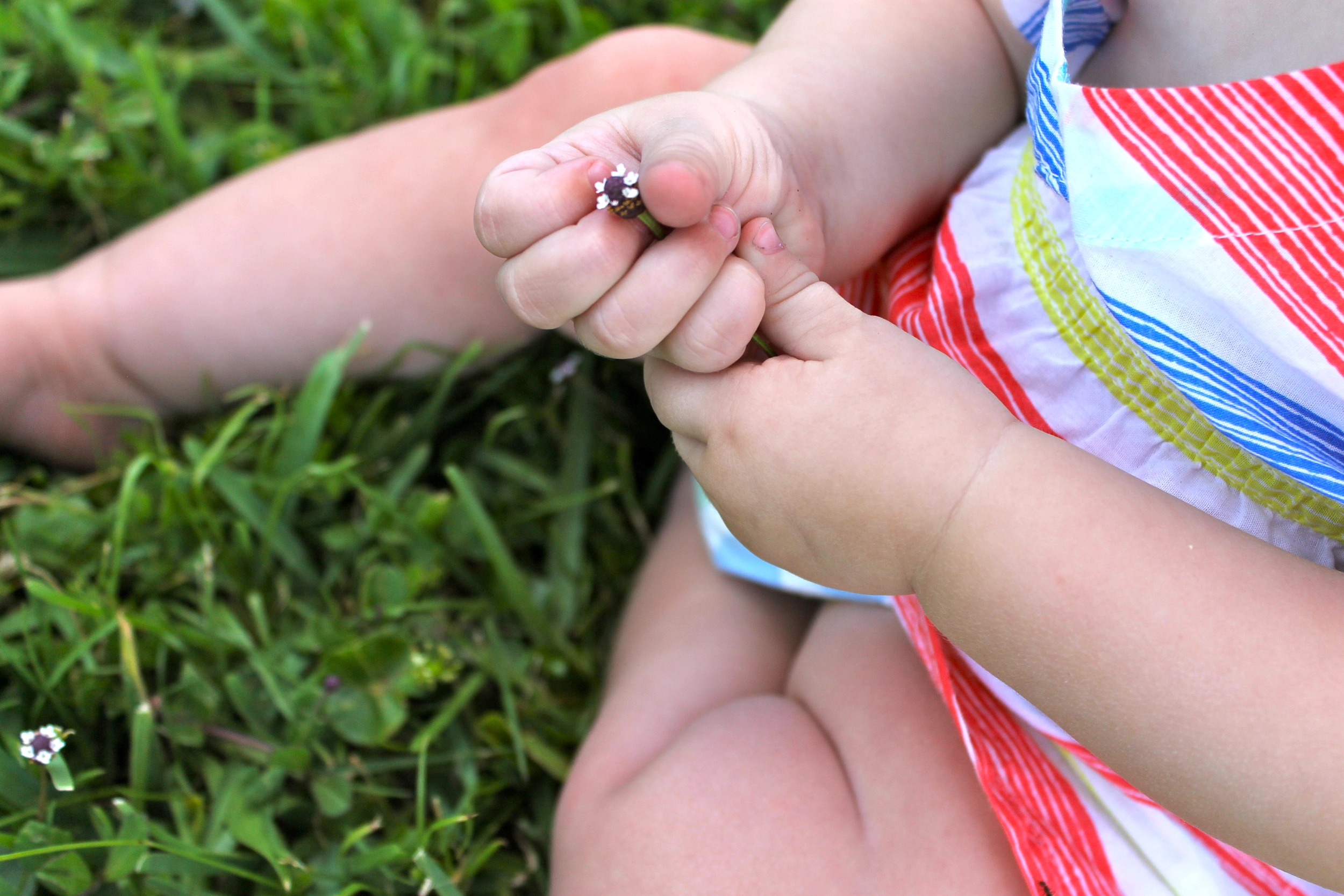 baby hands holding flower
