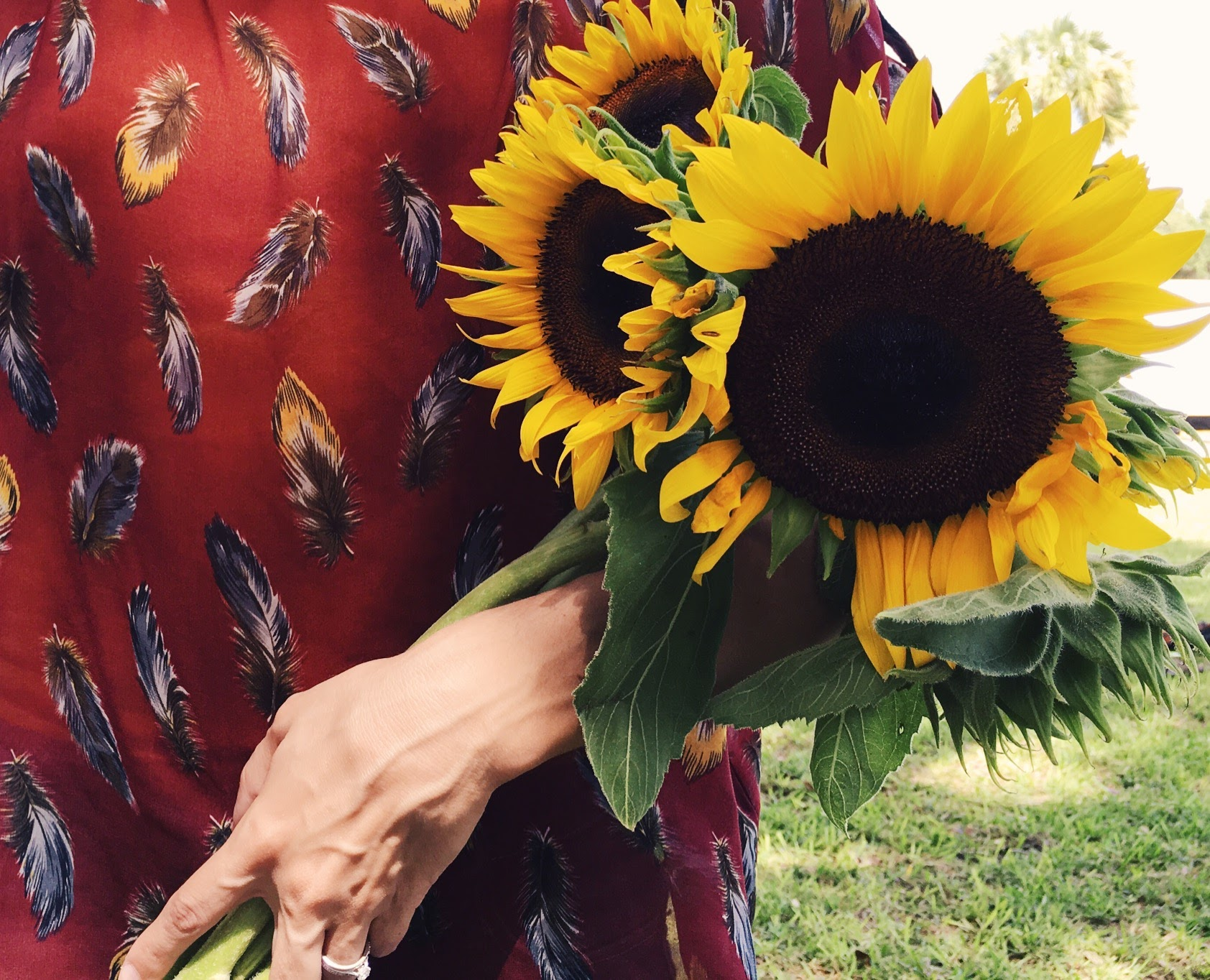 sunflowers, a Saturday photo story | Feathers and Roots