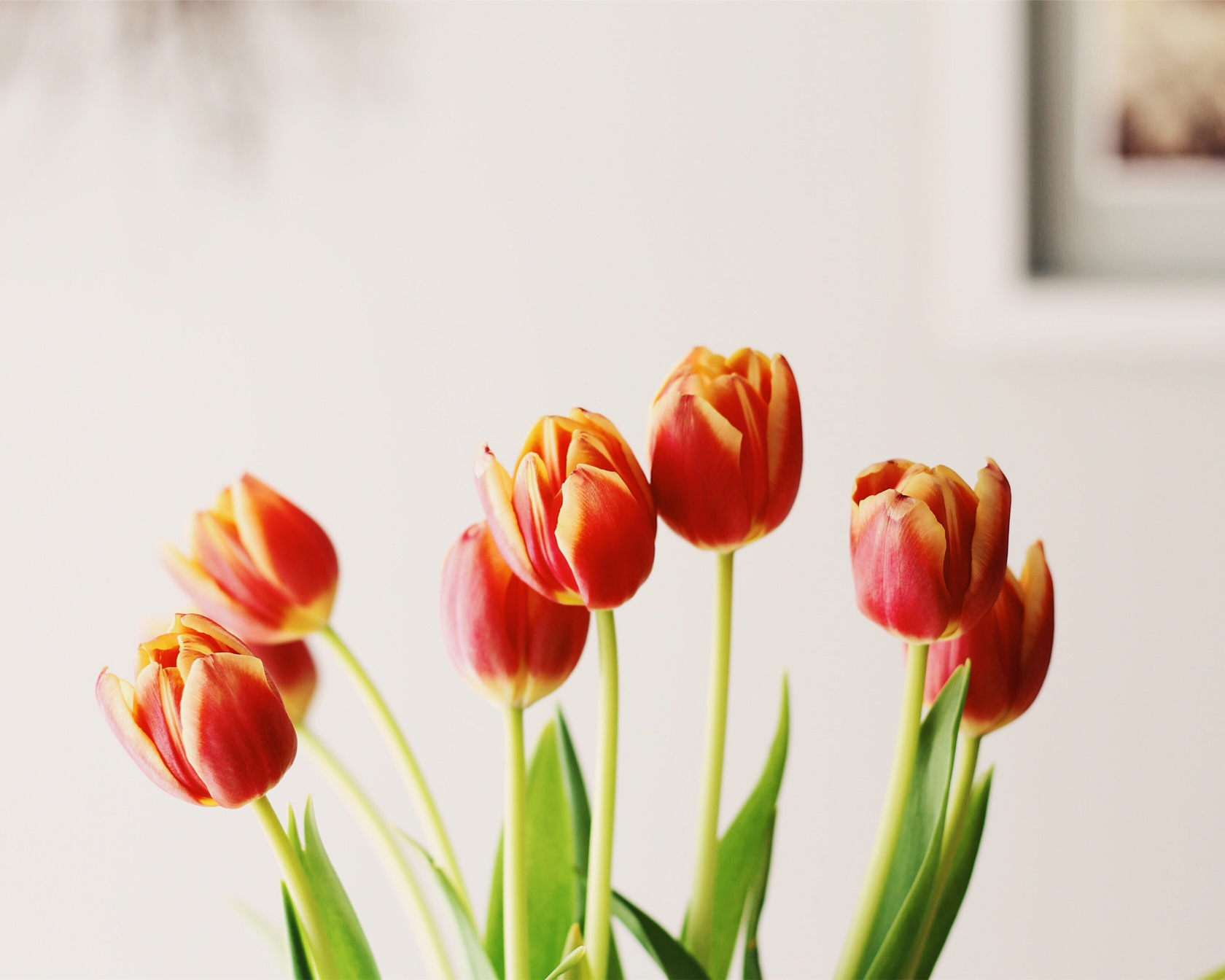tulips, spring, Good Friday post by Feathers and Roots