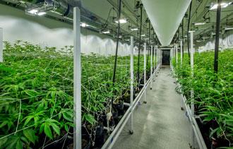 Photo Credit: Medicinal Marijuana Association
