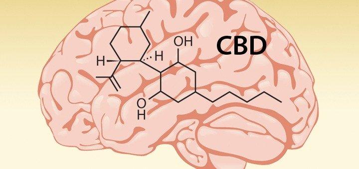 Photo Credit: Leaf Science