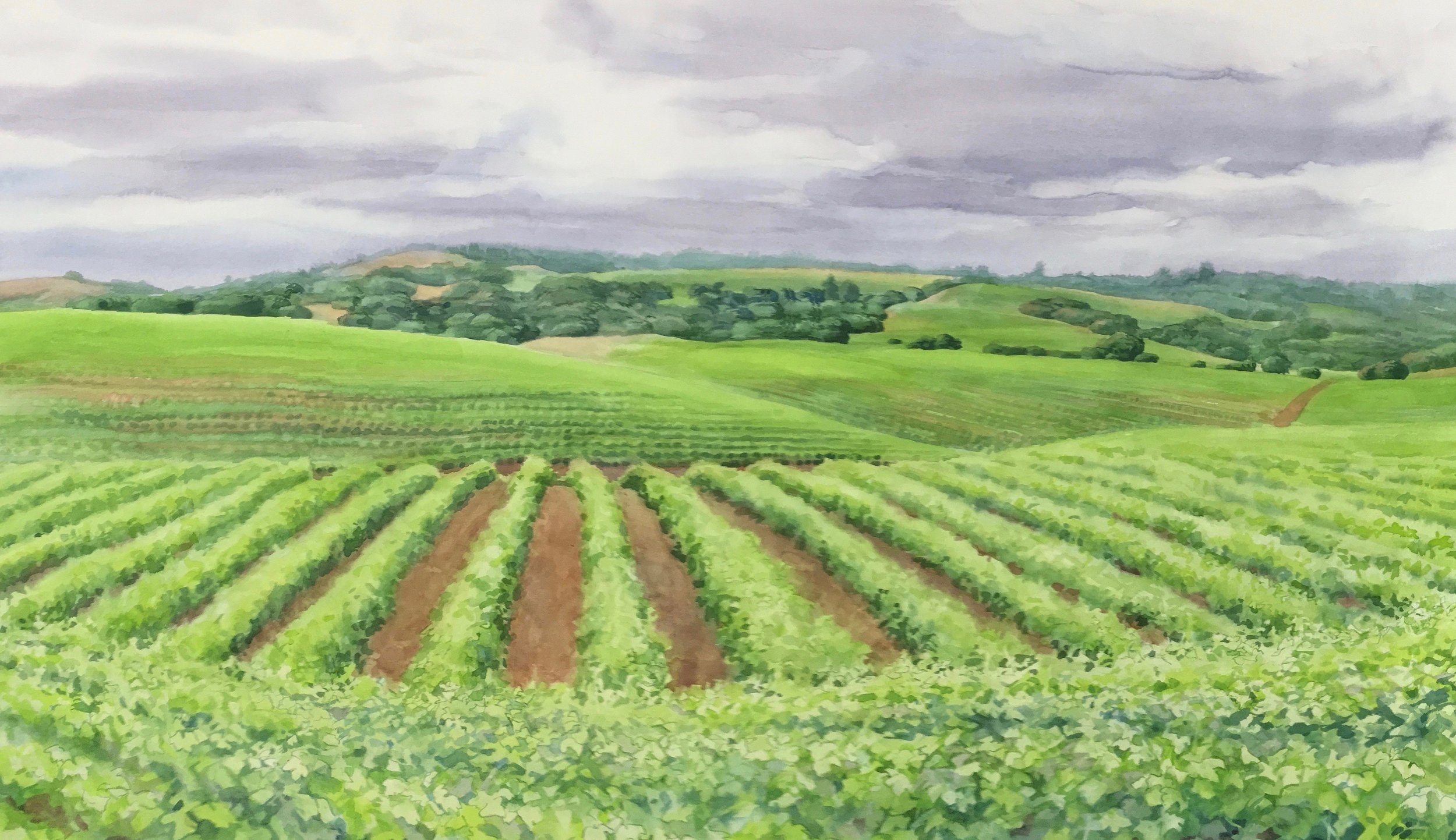 Title: Sonoma vinyard Year: 2016 Medium: PIGMENT PRINT Image size: 26 X 18 in.