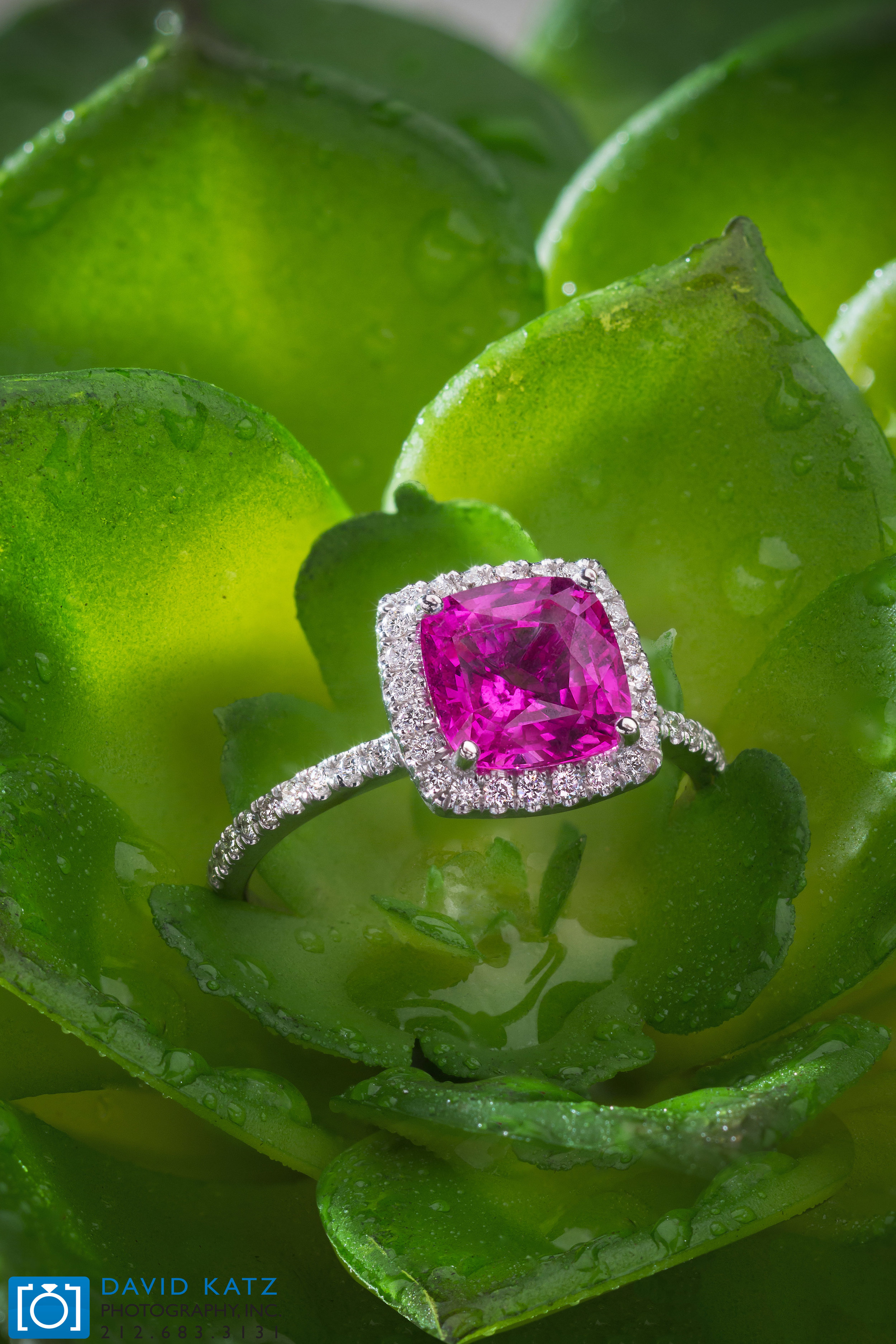 Pink Sapphire Ring on plant_NEWLOGO.jpg
