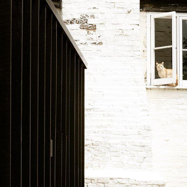 Marshall House. Photos by @richchivers #architecture #architecturelovers #architecturephotography #interiordesign #art #decor #design #designer #archdaily #photooftheday #interior #interiorlovers #modernhomes #instagood #design #picoftheday #instadaily #building #architect #architecturedaily #architectural #modern #photography #instaphoto #thebestnewarchitects #thebna #of #catsofinstagram #cats #cats_of_instagram #catstagram