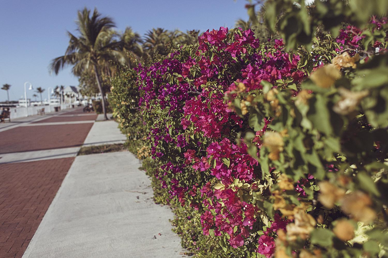 2017-03-08_Miami_Beach_184.jpg