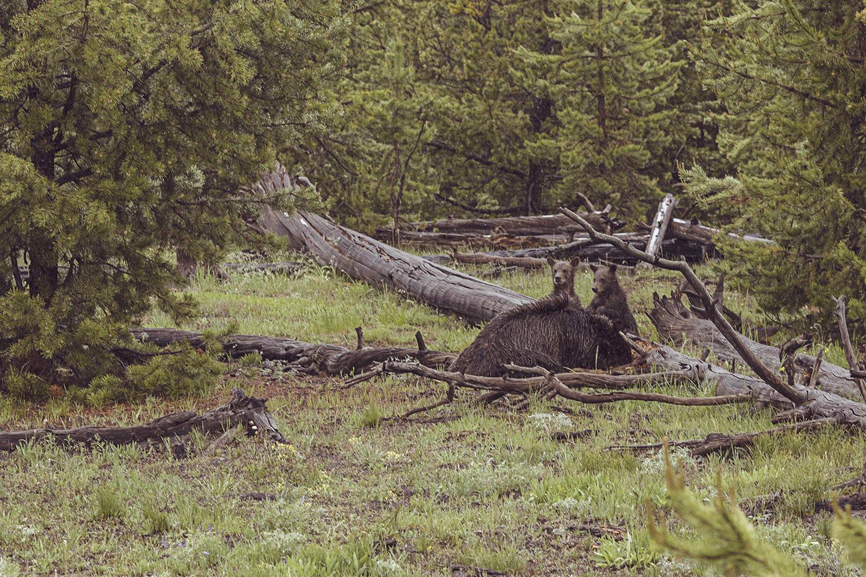 2017-06-13_Yellowstone_Nationalpark_073.jpg