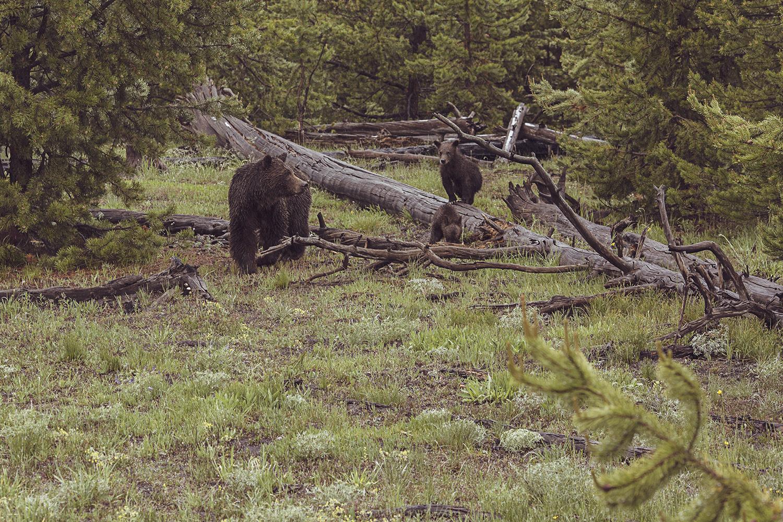 2017-06-13_Yellowstone_Nationalpark_076.jpg