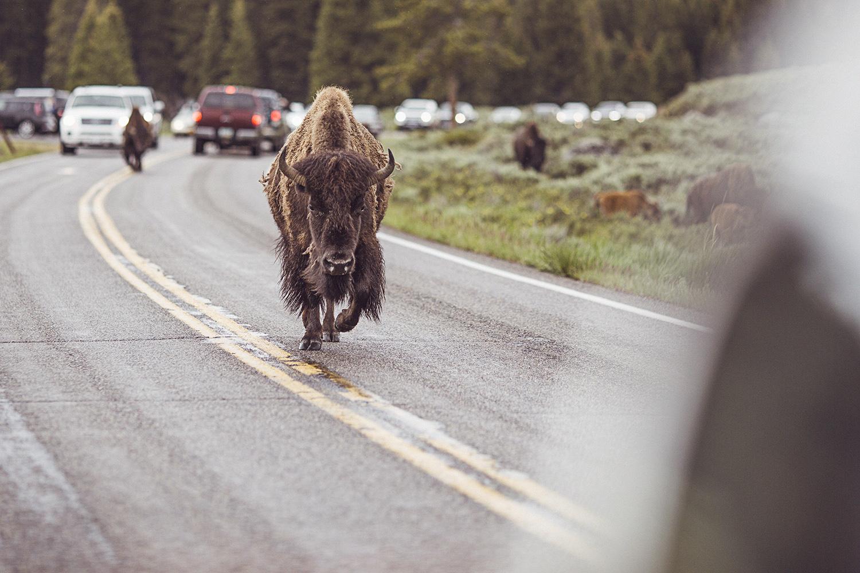 2017-06-13_Yellowstone_Nationalpark_134.jpg