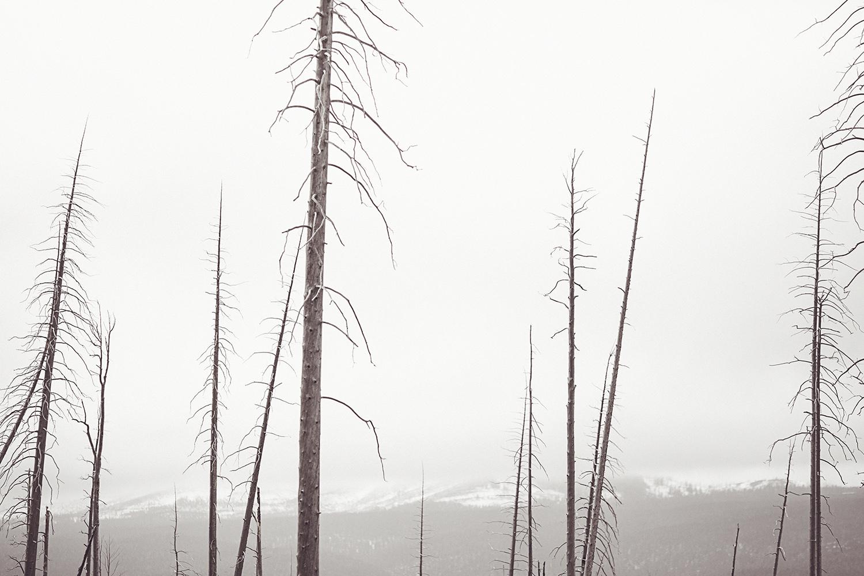 2017-06-13_Yellowstone_Nationalpark_149.jpg