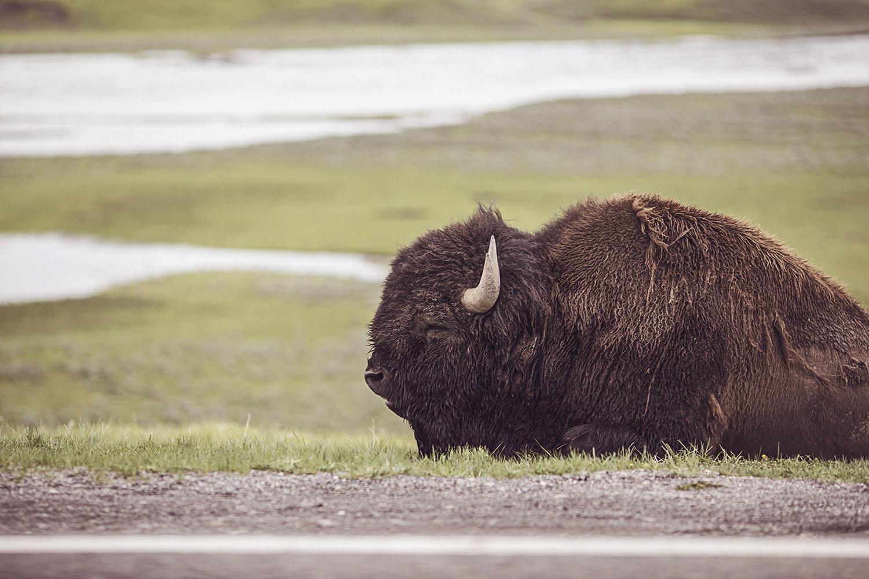 2017-06-13_Yellowstone_Nationalpark_156.jpg