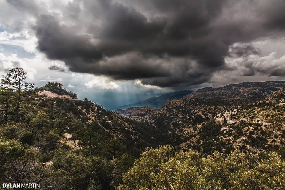 © 2015 Dylan Martin Photography