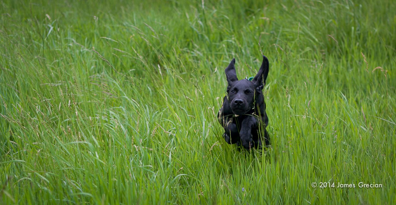 Hudson in the grass.jpg