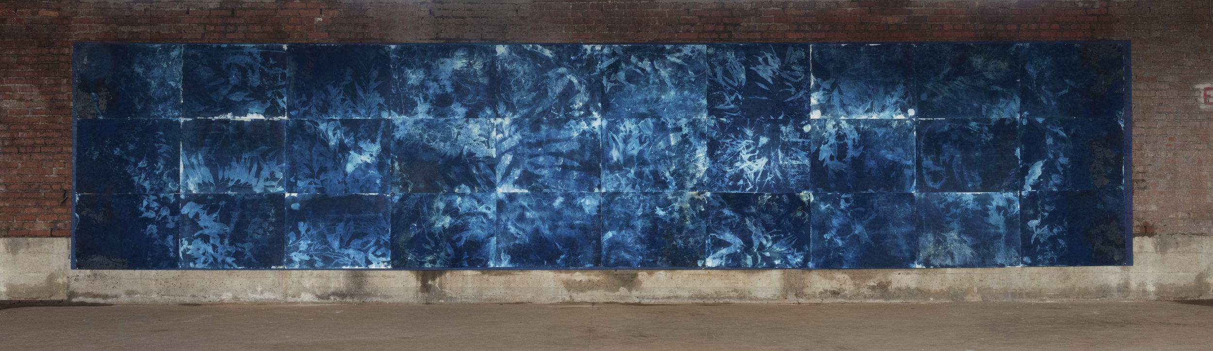 Mystic Kelp, Cyanotype, 8'x33'