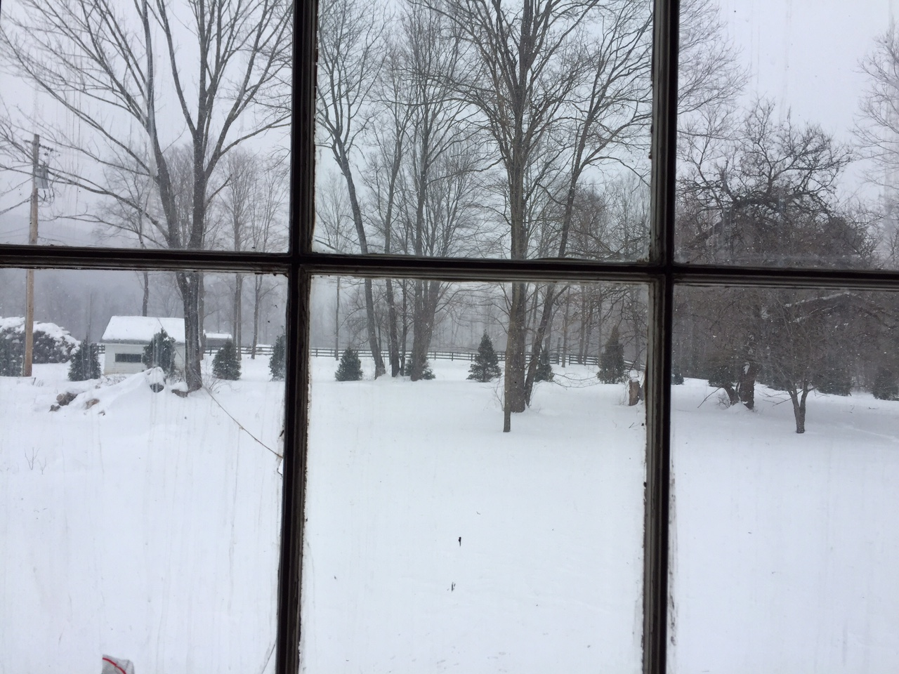 The view from the TV room while we were working. Our mini orchard will probably go in this area in the spring.