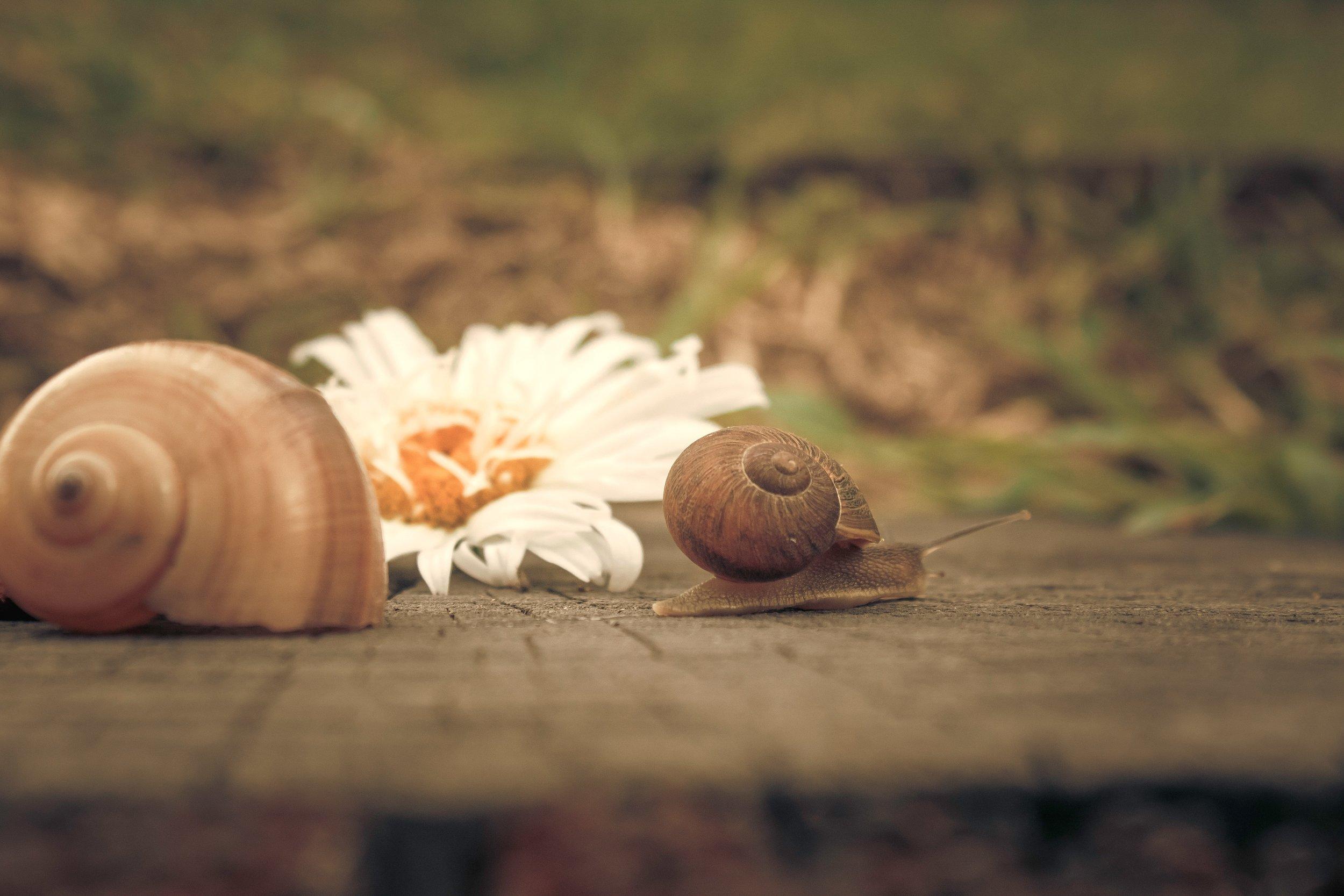 flower-gastropod-macro-605617.jpg