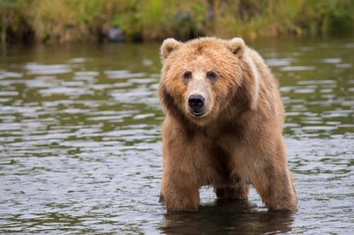 The Bear has returned for the first time in a decade.
