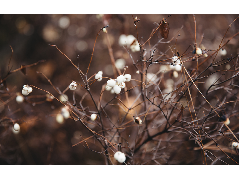Vanilla_Holiday2016_Lookbook_Part1_8.jpg