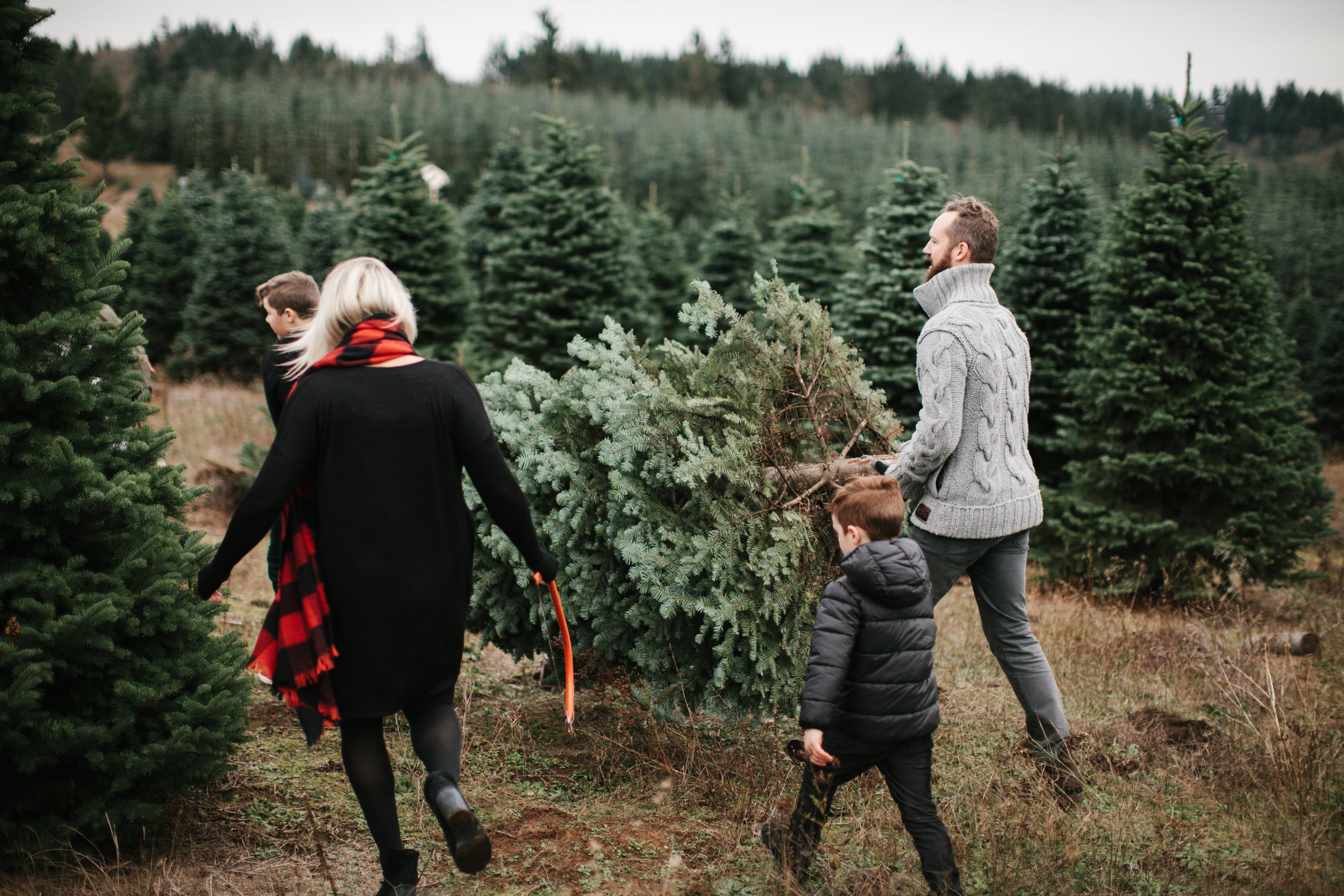 family carrying christmas tree