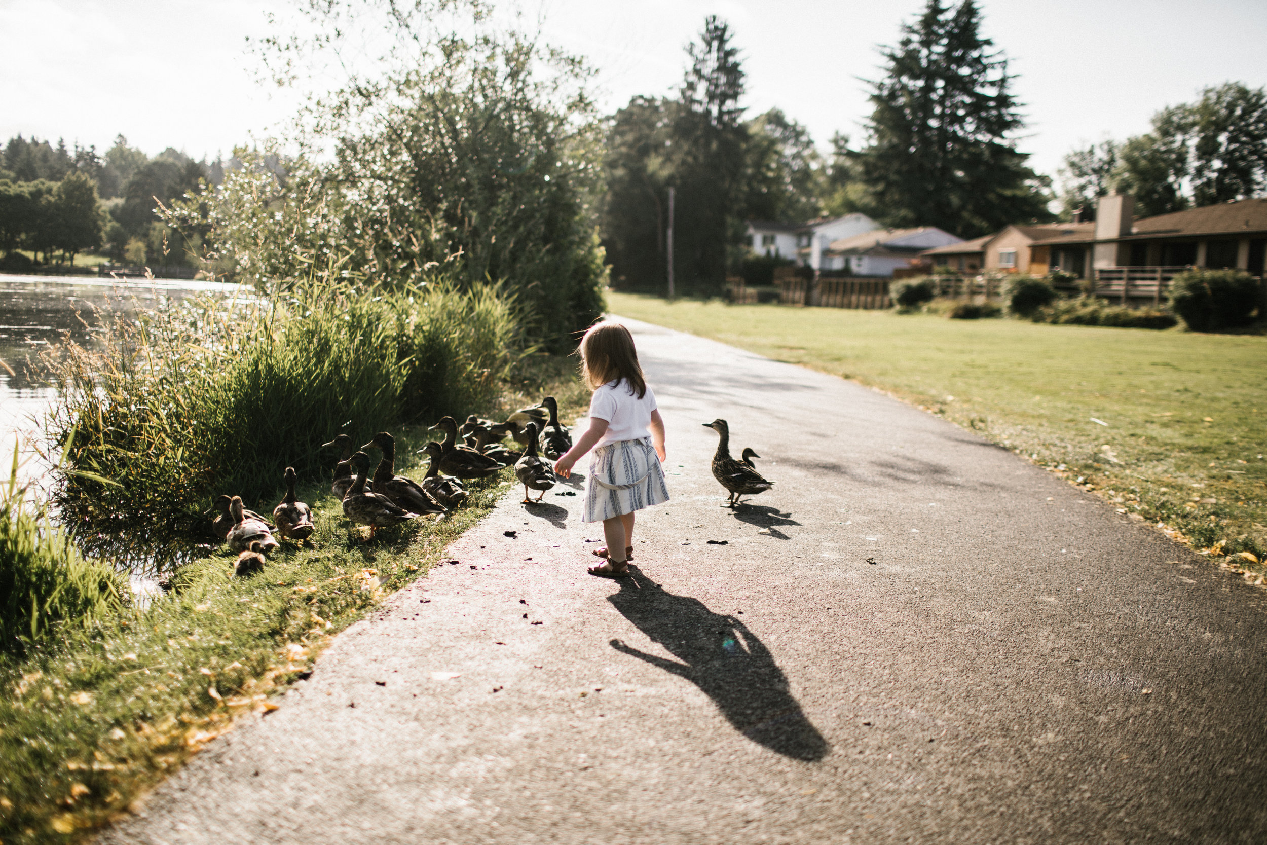 Toddler playing with ducks