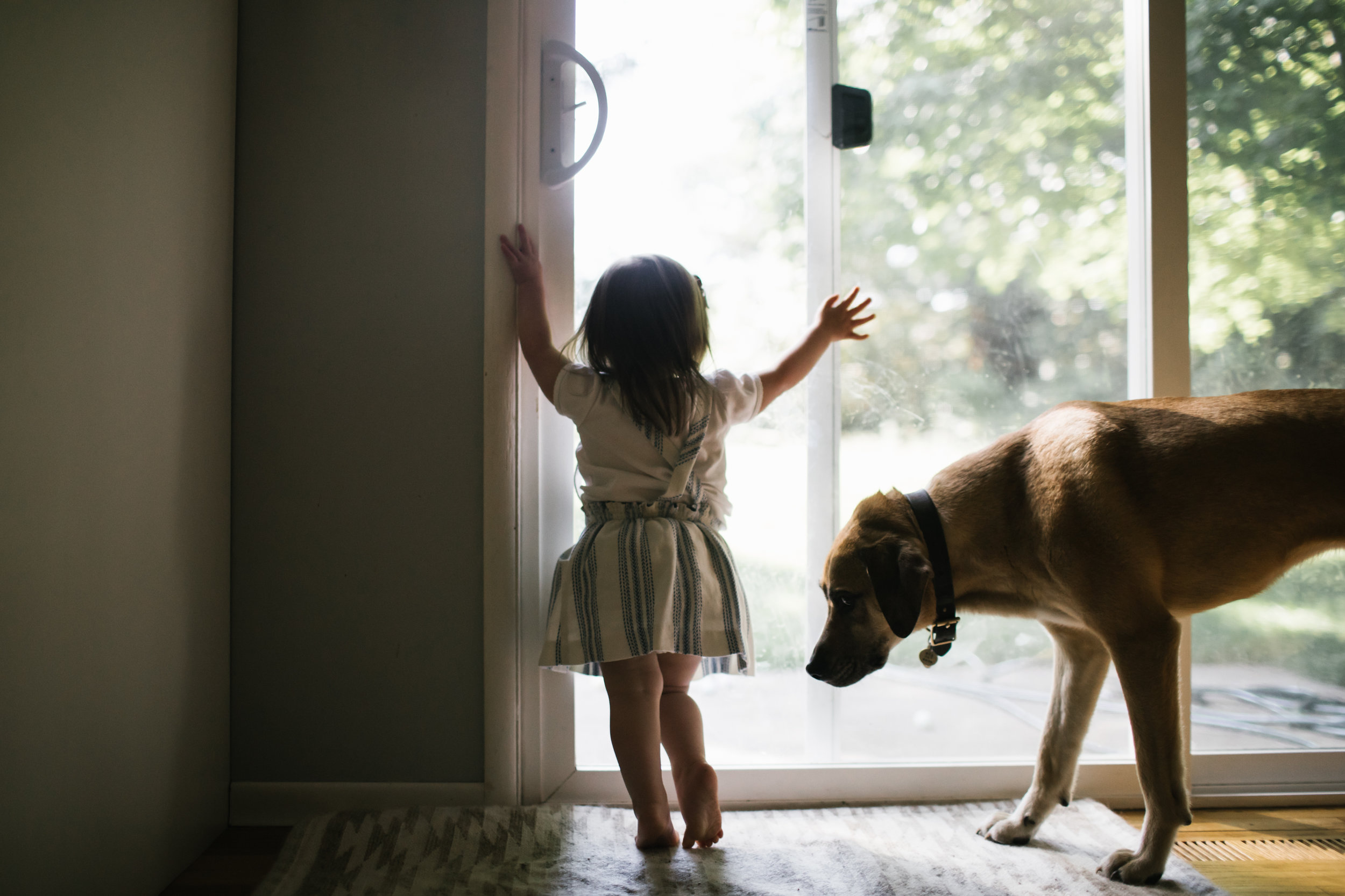 Toddler girl looking out window with dog