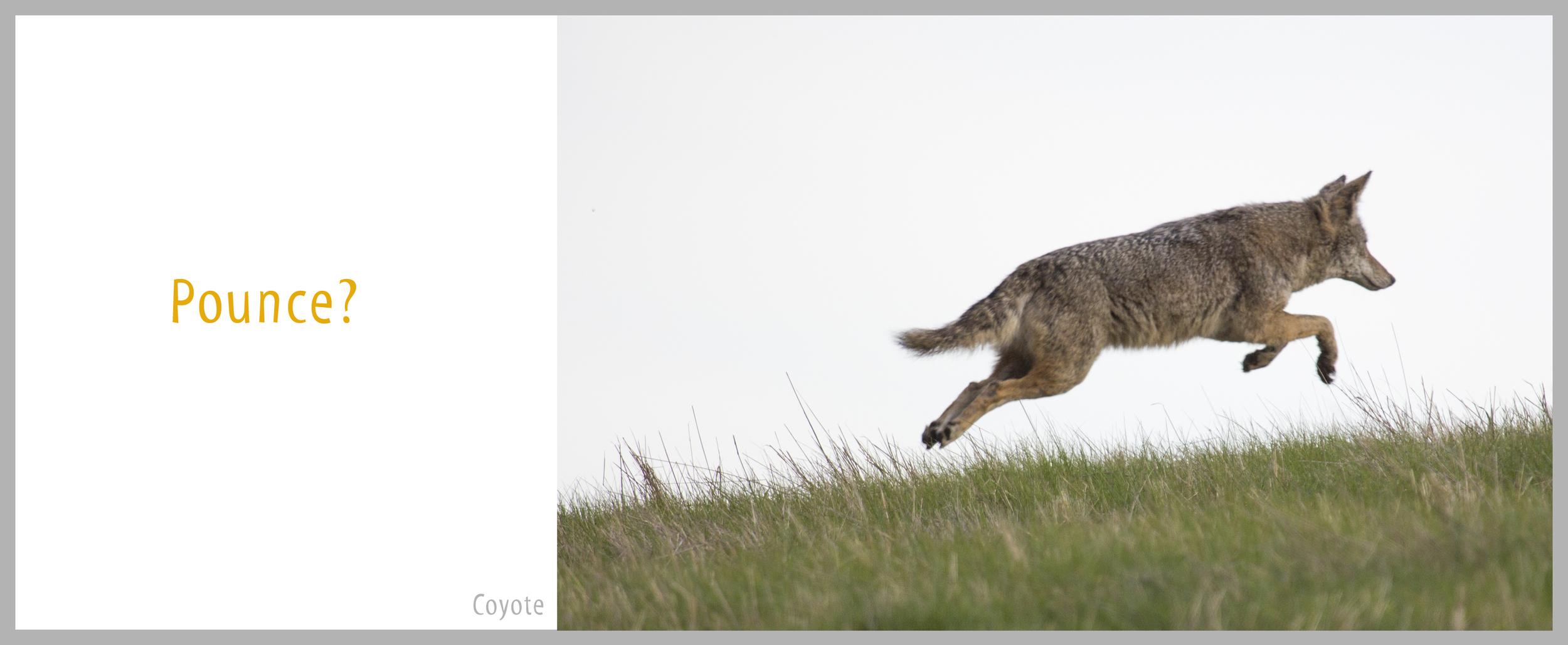 04Bond-2716.Coyote.jpg