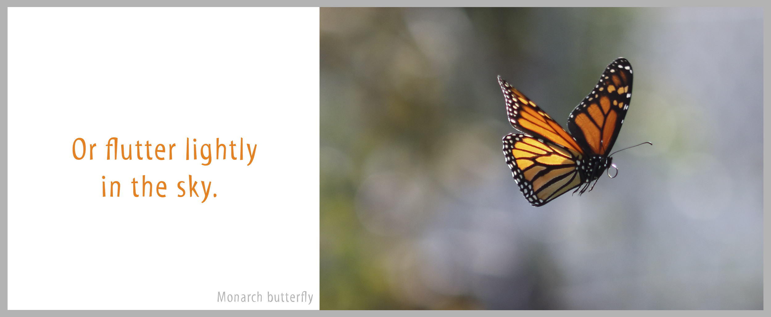 06Bond-0349.Butterfly.jpg