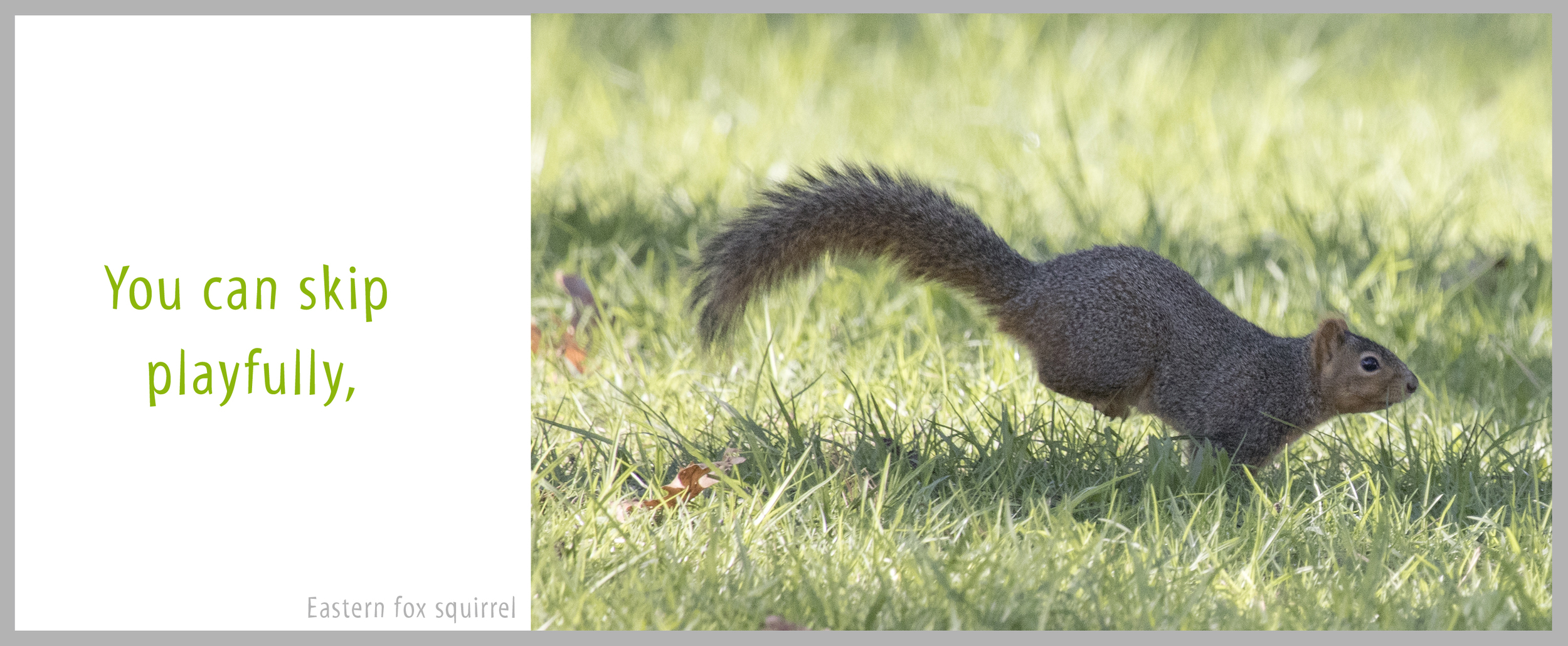 09Bond-1444.Squirrel.jpg