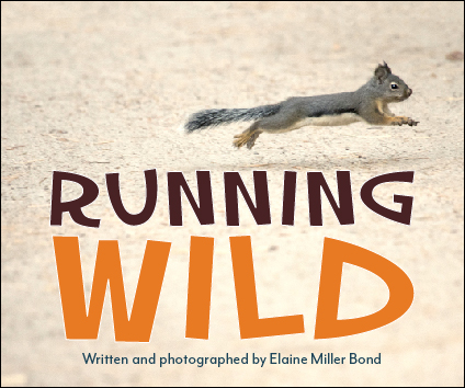 Running Wild  Written and photographed by Elaine Miller Bond Heyday Books (October 2016) ISBN: 978-1-59714-364-6
