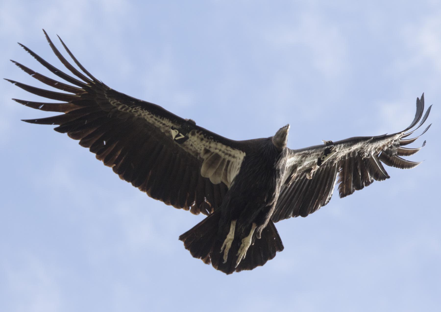 Condor: SOAR, GLIDE
