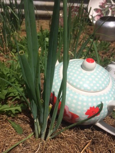 Garden tpot.jpg