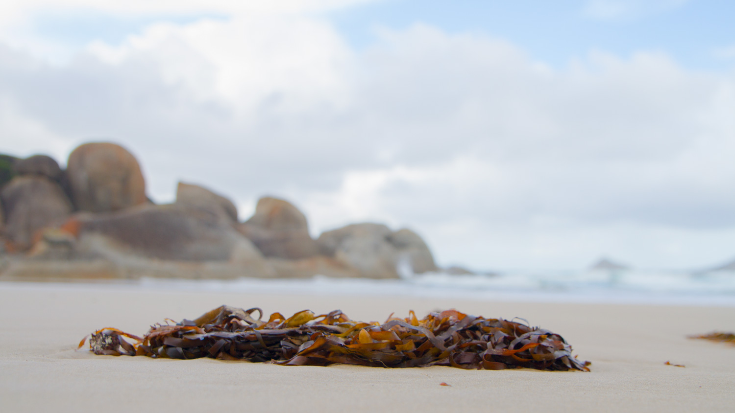 All this and I'm taking photos of seaweed...