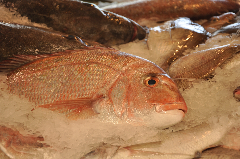 Auckland seafood market 8.jpg