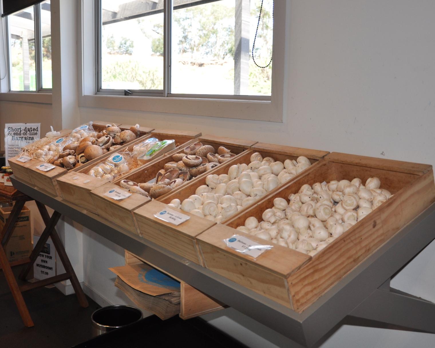 Te Mata Mushrooms