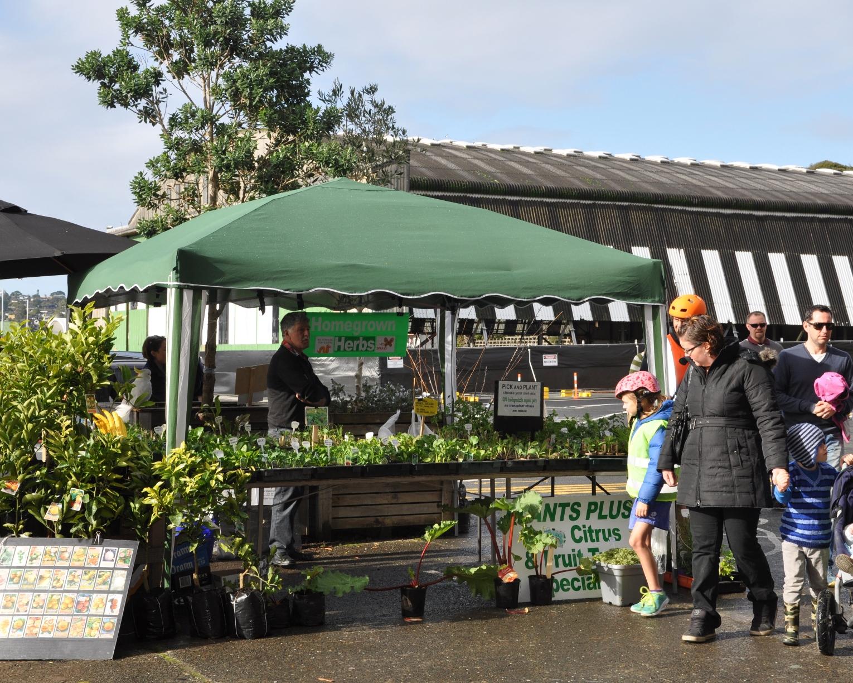 Vegetable, citrus and herb seedlings
