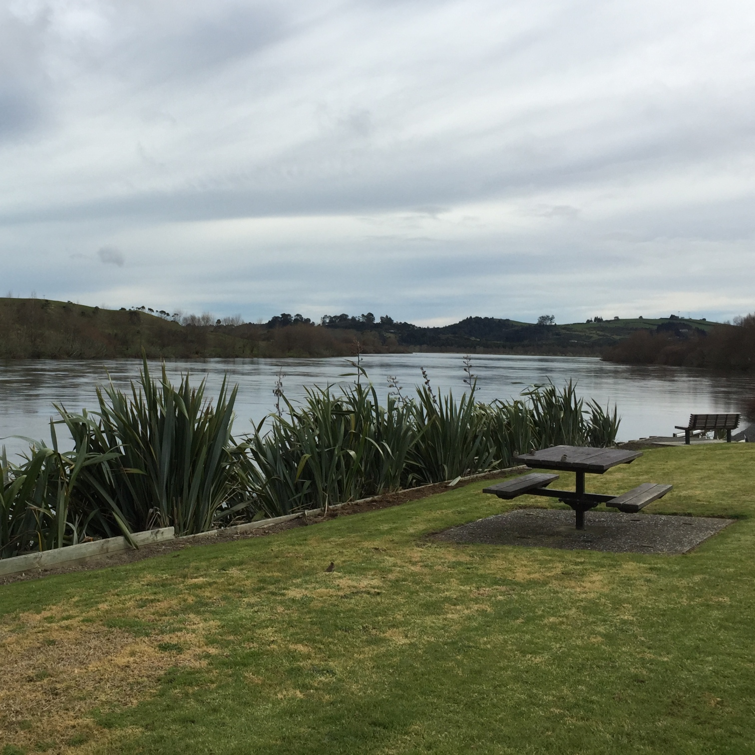 Picnic next to the Waikato River