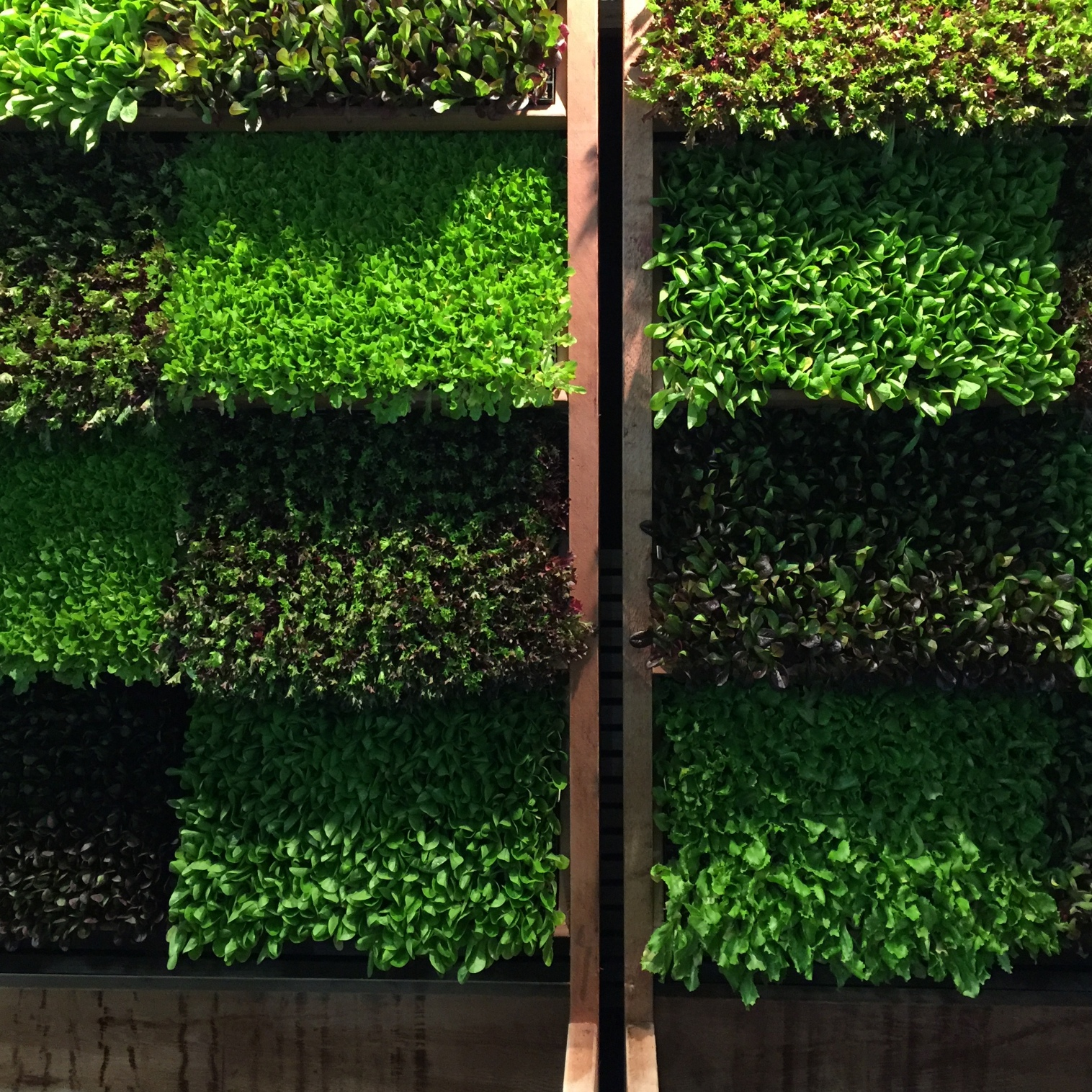 Leaderbrand  living wall