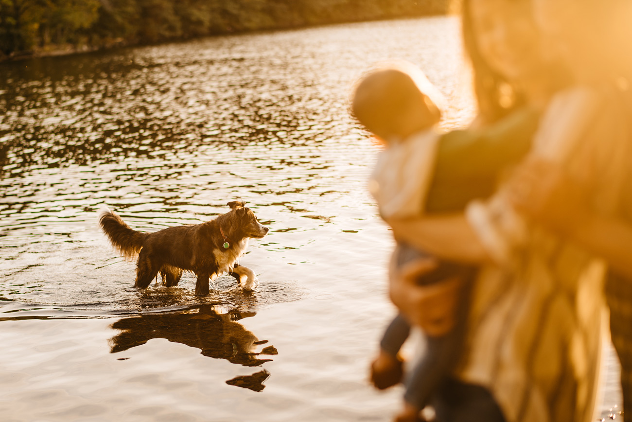 lifestyle boston family and dog photography