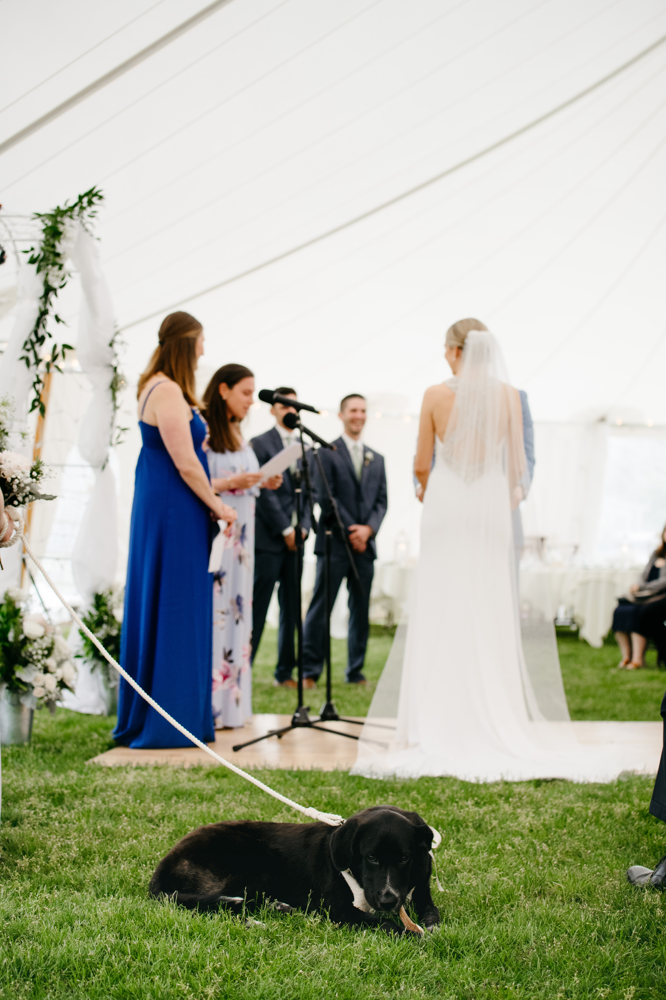 bring a dog to your wedding in cape cod