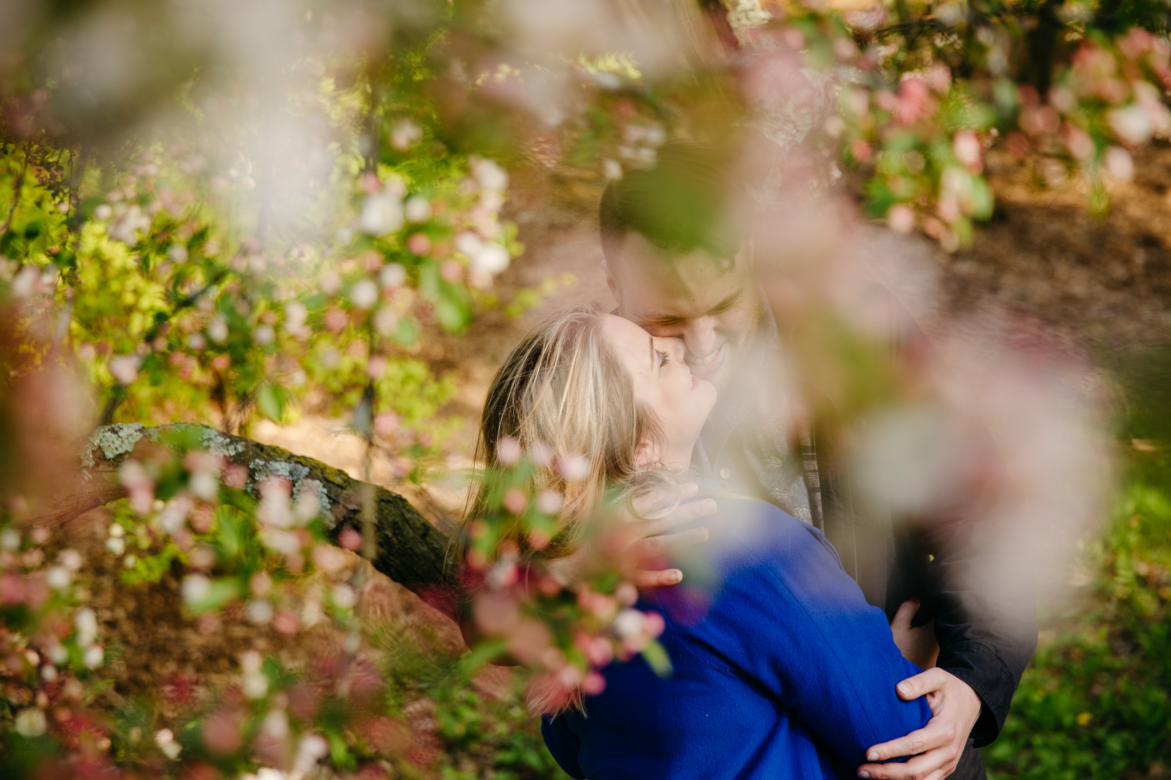 arnold aboretum engagement photos in spring creative wedding photographer