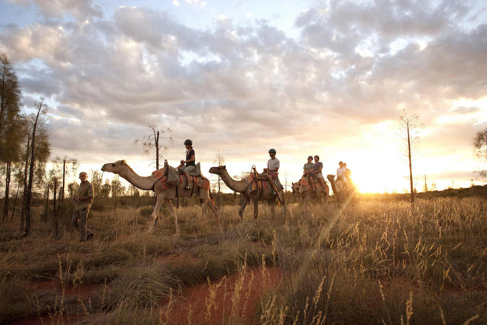 CAMEL RIDING IN THE DESERT - NORTHERN TERRITORY